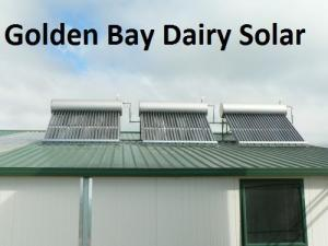 Golden Bay dairy farm Image ©
